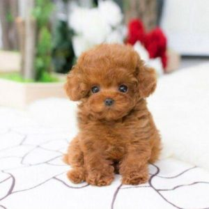 LuckyDog™ Realistic Teddy Dog Lifelike Lucky Puppy Simulation Plush Toys